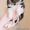Щенок шелти (девочка) #1260775