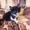 подарю прекрасных котят #1499308