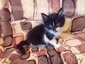 подарю прекрасных котят